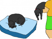 master carries dogs to bed